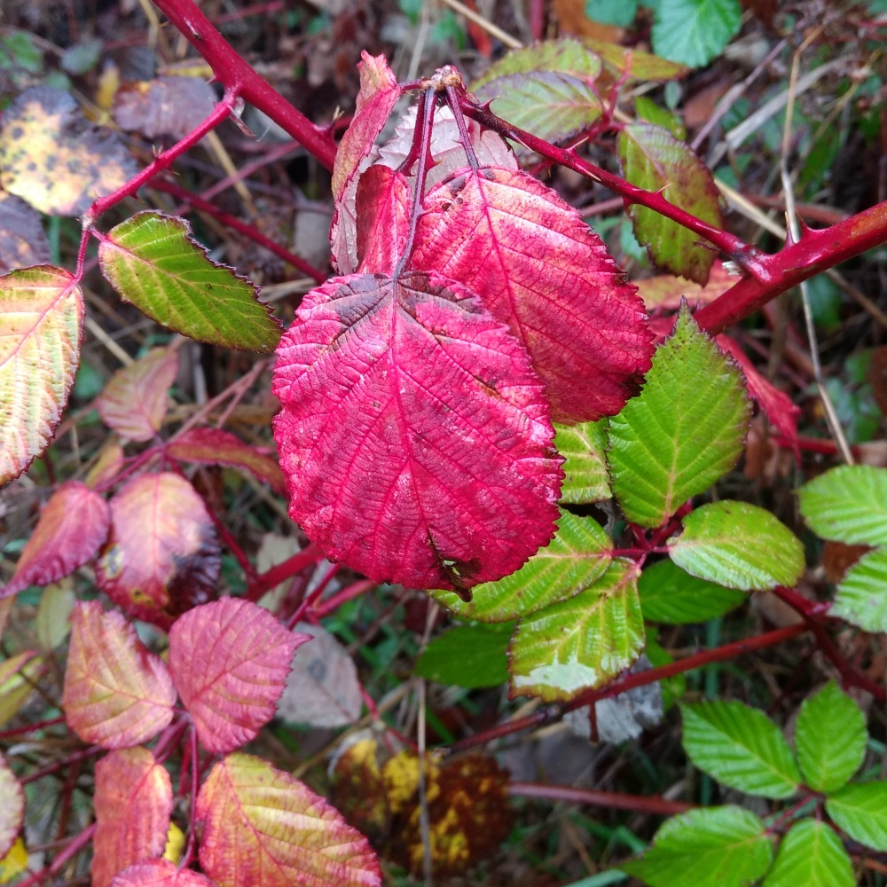 blog-slide-show-red-berry-leaves