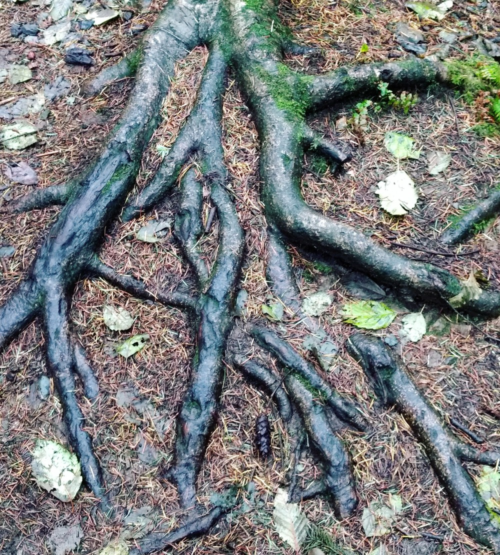 blog-slide-show-tree-roots