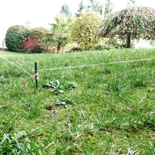 staked-out-garden-pic-1