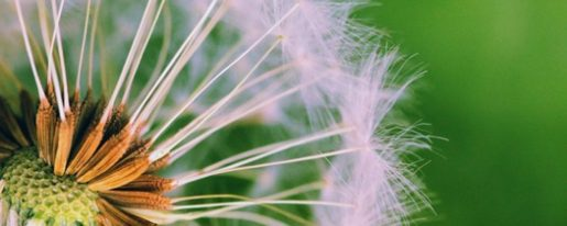 cropped-seedling-in-the-wind2.jpeg